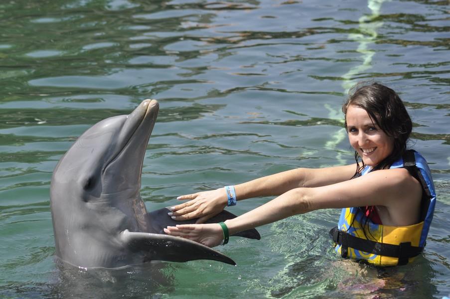 dauphin mexique