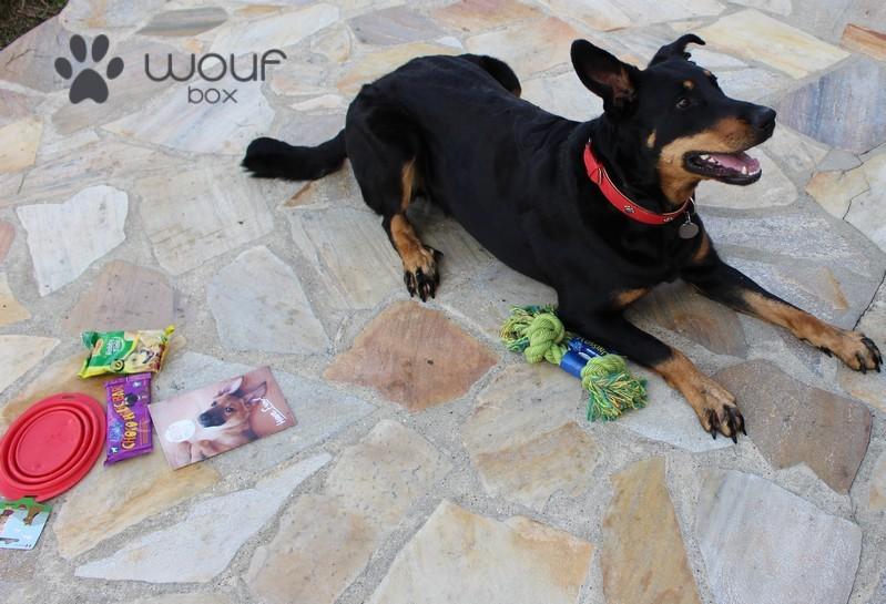 Woufbox chien