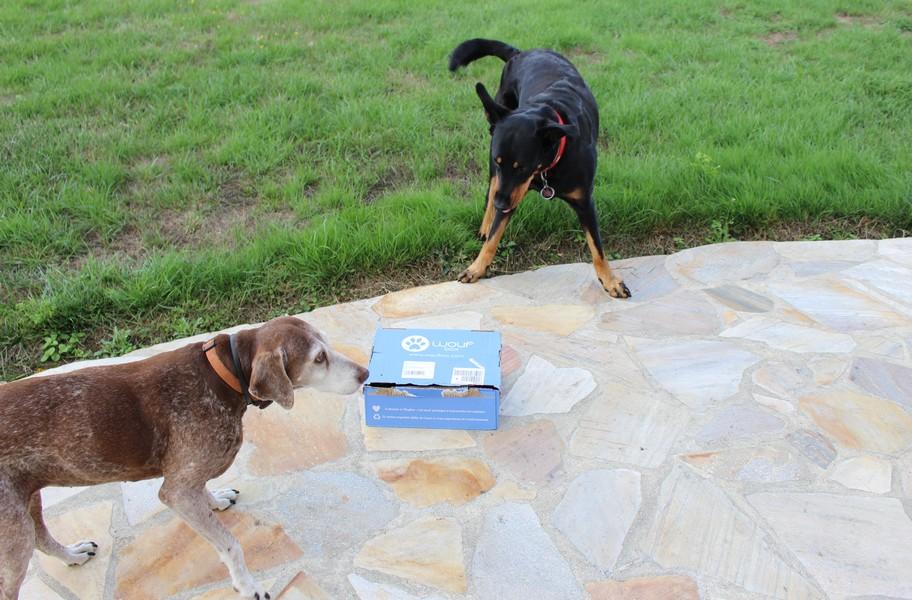 box canine