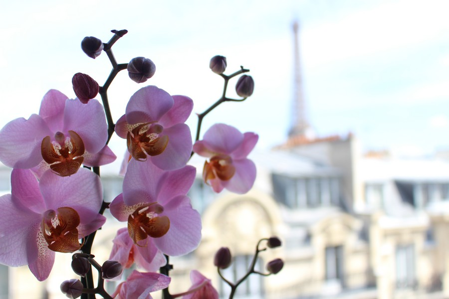 orchidee paris