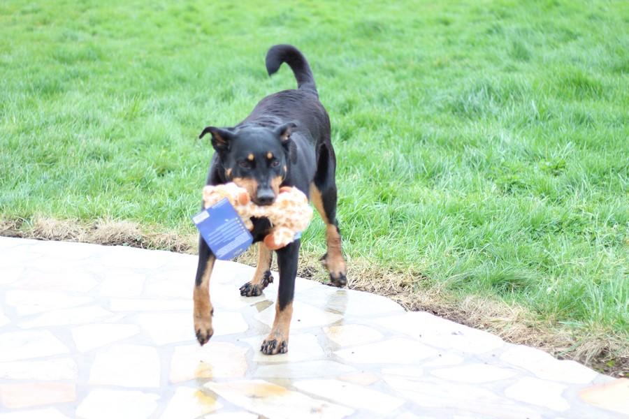 jouet pour chien