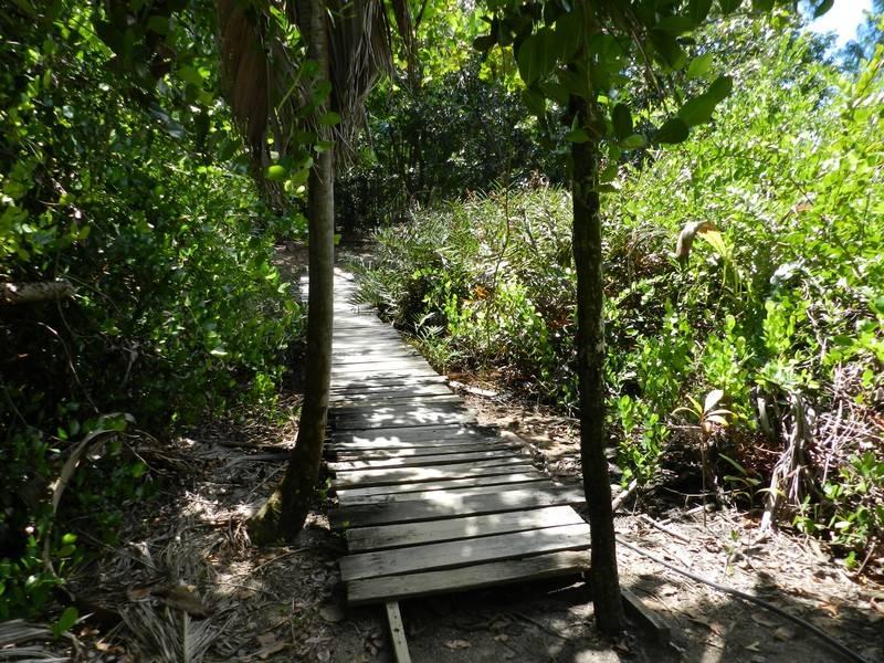curious island seychelles