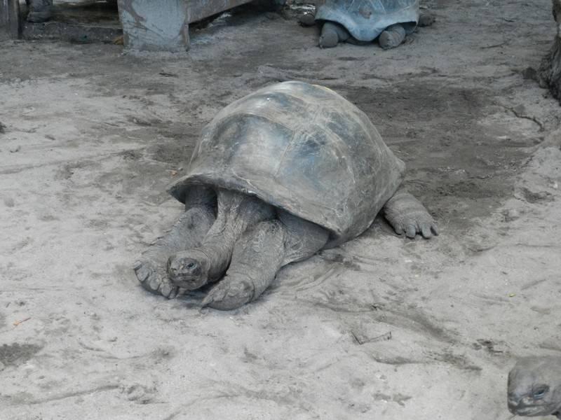 tortue seychelles