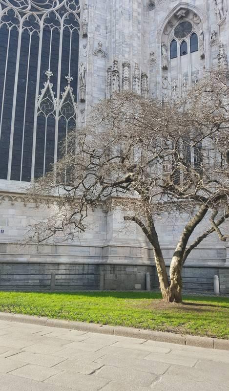 arbre milan