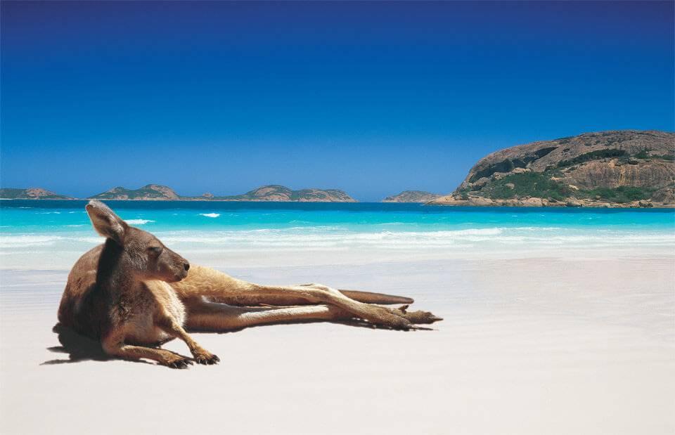 kangourou-plage-australie