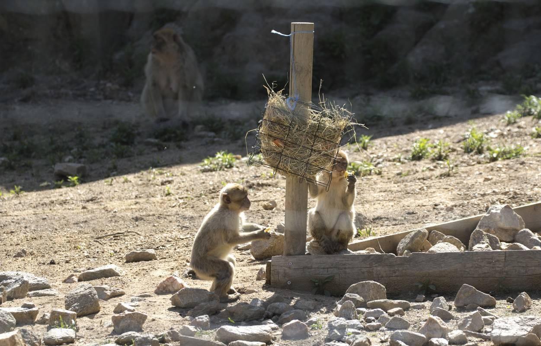 parc animalier d-auvergne