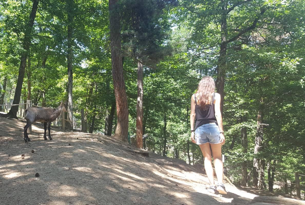 parc animalier d auvergne